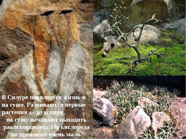 В Силуре появляется жизнь и на суше. Развиваются первые растения—куксонии,...