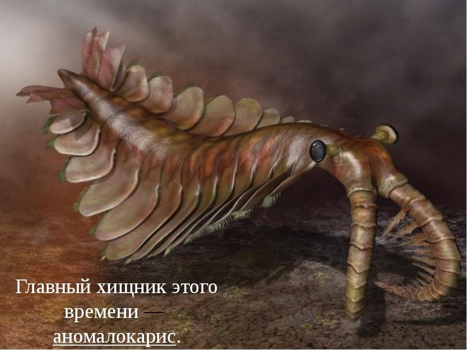 Главный хищник этого времени—аномалокарис.