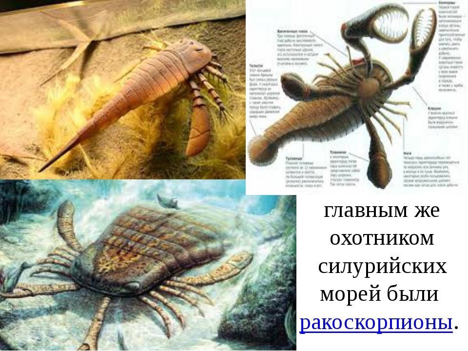 главным же охотником силурийских морей были ракоскорпионы.