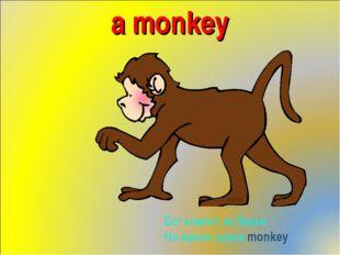 a monkey Ест компот из банки На арене циркаmonkey