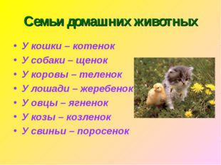 Семьи домашних животных У кошки – котенок У собаки – щенок У коровы – теленок
