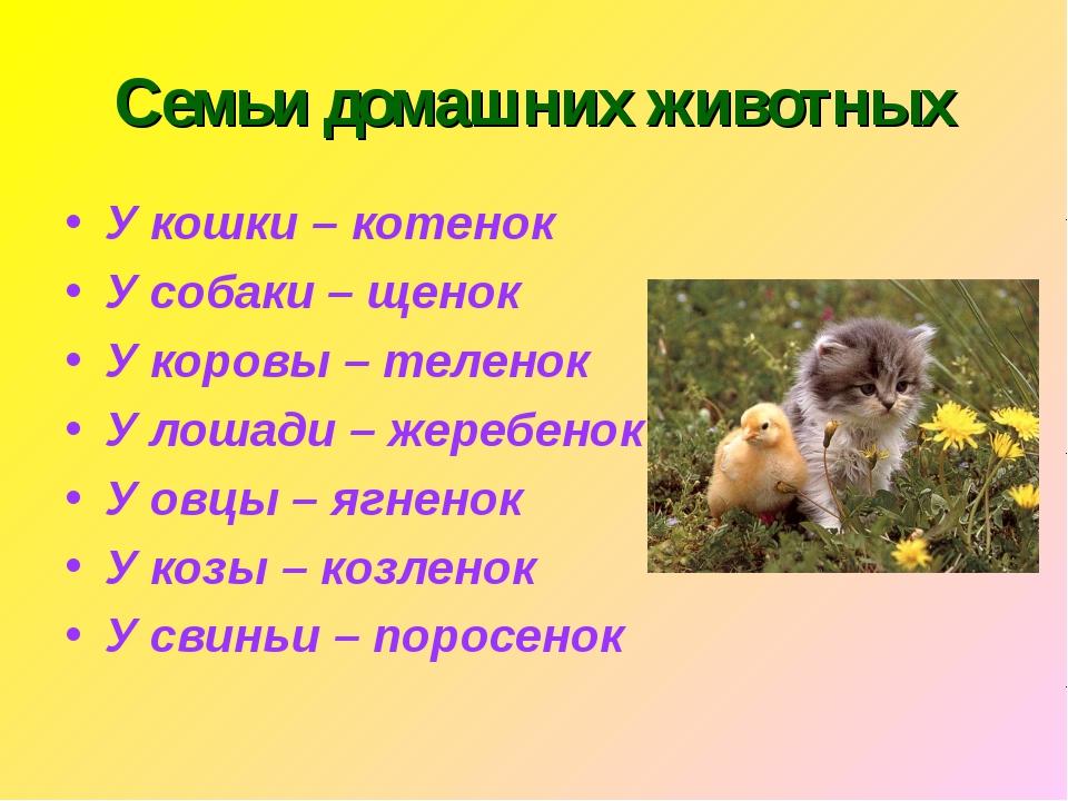 Семьи домашних животных У кошки – котенок У собаки – щенок У коровы – теленок...