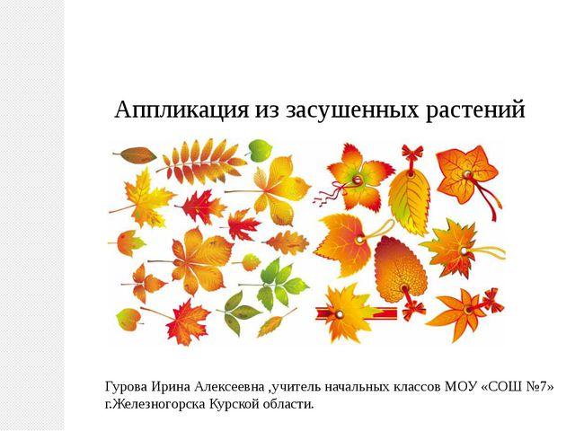 Аппликация из засушенных растений Гурова Ирина Алексеевна ,учитель начальных...