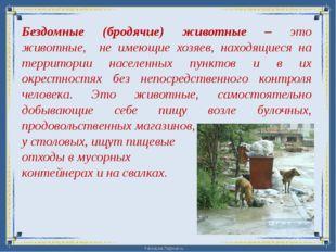 Бездомные (бродячие) животные – это животные, не имеющие хозяев, находящиеся