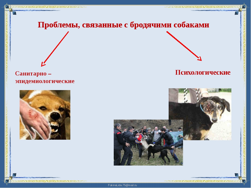 Проблемы, связанные с бродячими собаками Санитарно – эпидемиологические Психо...