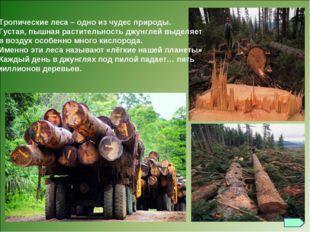 Тропические леса – одно из чудес природы. Густая, пышная растительность джун