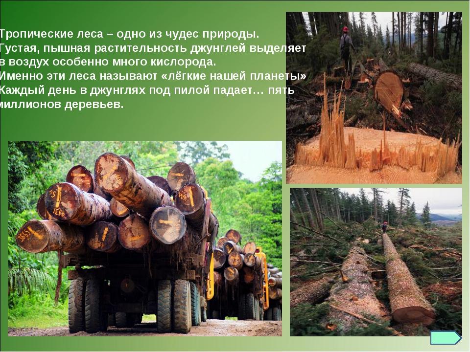 Тропические леса – одно из чудес природы. Густая, пышная растительность джун...