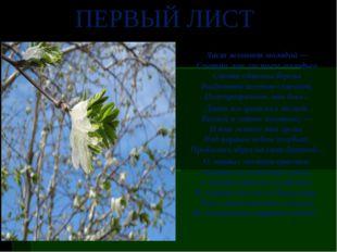 Лист зеленеет молодой — Смотри, как листьем молодым Стоят обвеяны березы Возд