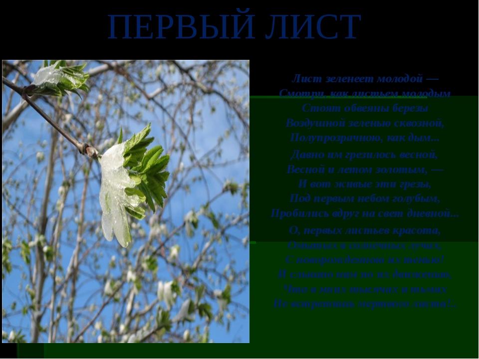 Лист зеленеет молодой — Смотри, как листьем молодым Стоят обвеяны березы Возд...