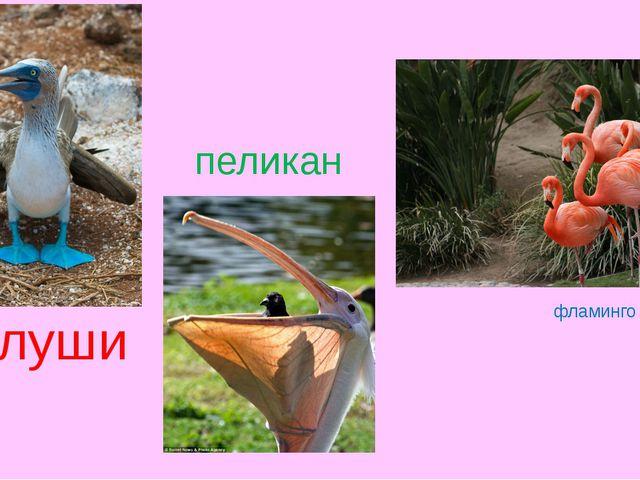 олуши фламинго пеликан