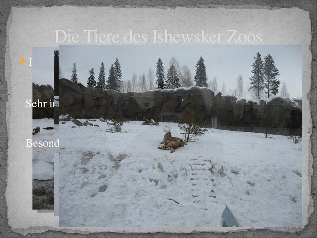 Im Zoo leben Braunbären und Eisbären. Die Tiere des Ishewsker Zoos Sehr inter...