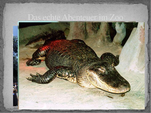 Das echte Abenteuer im Zoo Nicht nur Kinder und Erwachsene, sondern auch ausl...