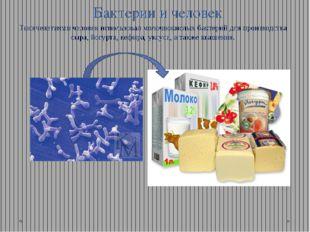 Бактерии и человек Тысячелетиями человек использовал молочнокислых бактерий д