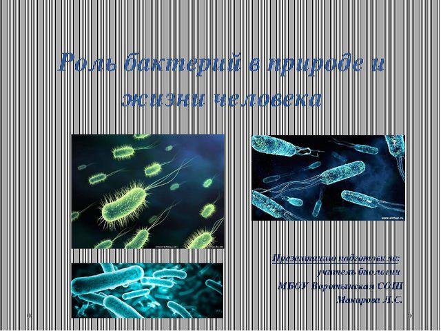 Роль бактерий в природе и жизни человека Презентацию подготовила: учитель био...