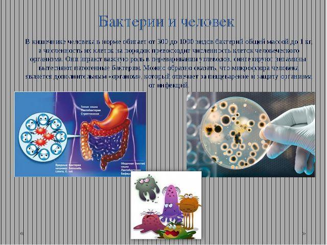 Бактерии и человек В кишечнике человека в норме обитает от 300 до 1000 видов...