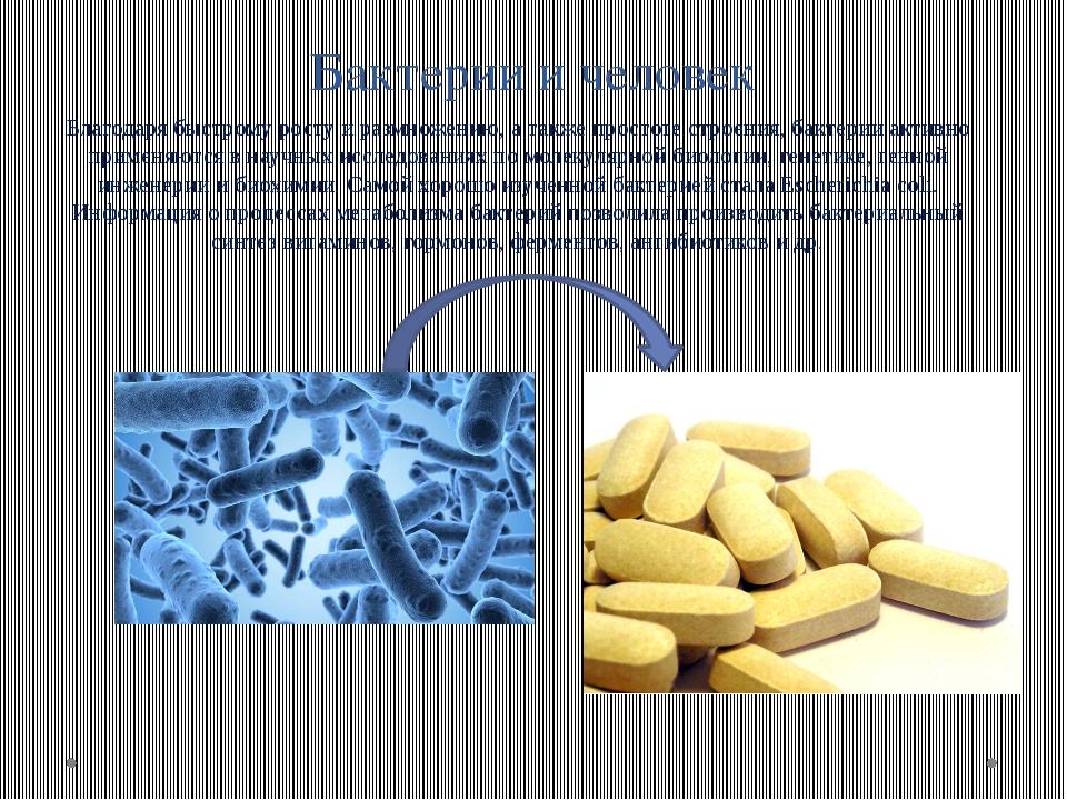 Бактерии и человек Благодаря быстрому росту и размножению, а также простоте с...