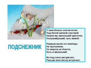 У занесённых снегом кочек Под белой шапкой снеговой Нашли мы маленький цветоч