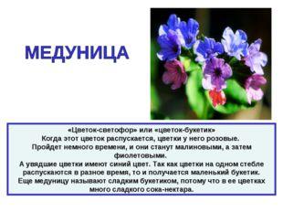 «Цветок-светофор» или «цветок-букетик» Когда этот цветок распускается, цветки