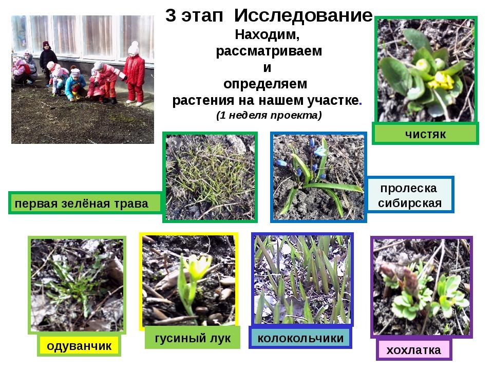 3 этап Исследование Находим, рассматриваем и определяем растения на нашем уч...