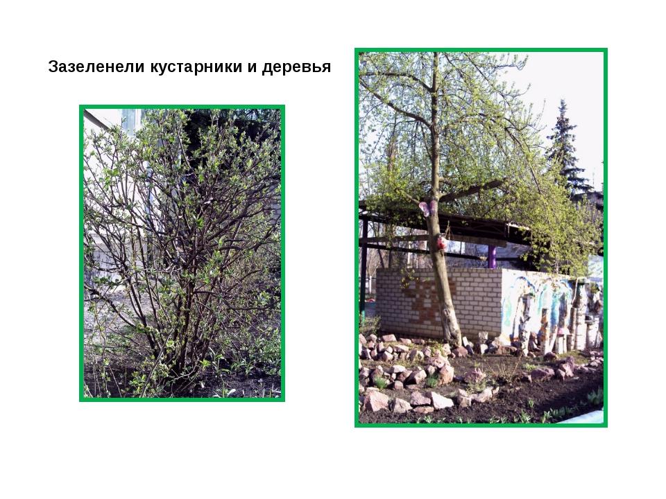 Зазеленели кустарники и деревья