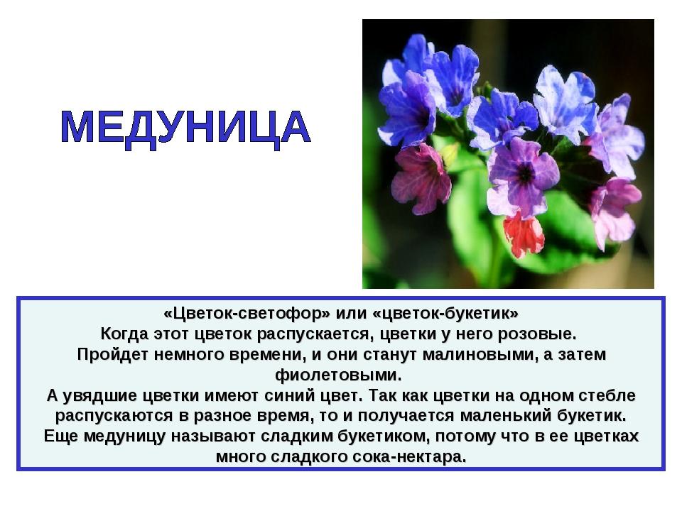 «Цветок-светофор» или «цветок-букетик» Когда этот цветок распускается, цветки...