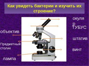 Как увидеть бактерии и изучить их строение? окуляр ТУБУС штатив винт объектив