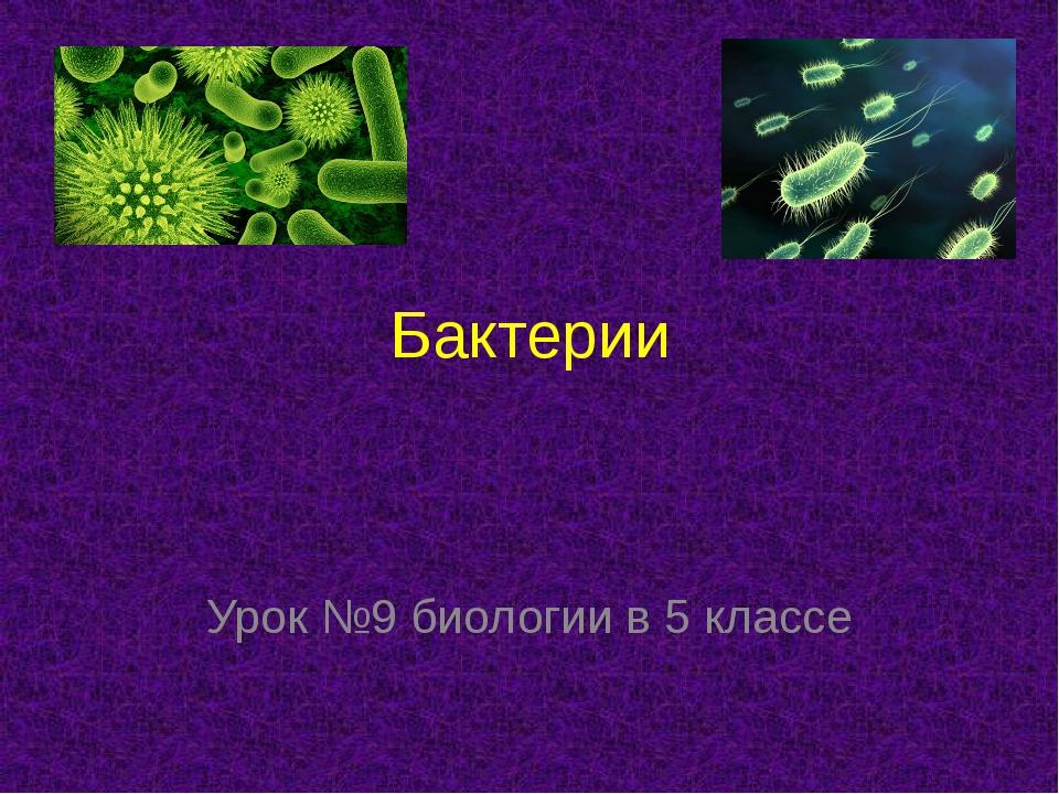 Бактерии Урок №9 биологии в 5 классе
