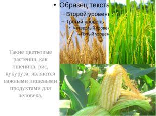 Такие цветковые растения, как пшеница, рис, кукуруза, являются важными пищев