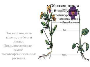 Также у них есть корень, стебель и листья. Покрытосеменные – самые высокоорг