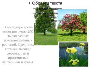 В настоящее время известно около 250 тысяч разных покрытосеменных растений.