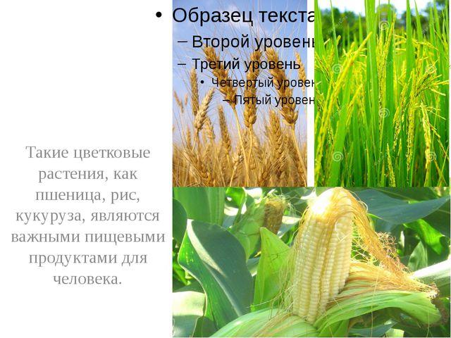 Такие цветковые растения, как пшеница, рис, кукуруза, являются важными пищев...