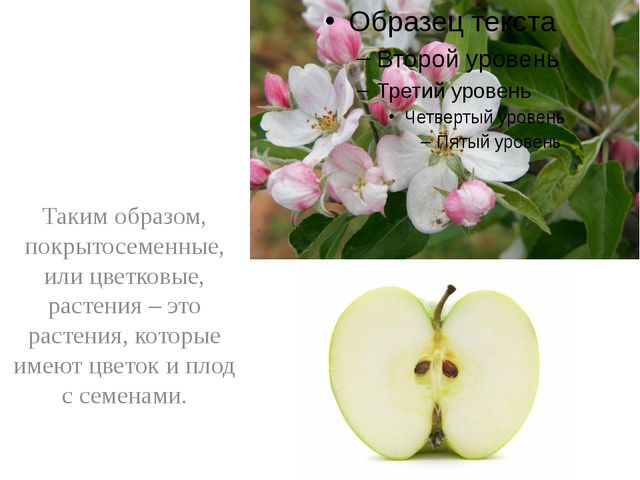 Таким образом, покрытосеменные, или цветковые, растения – это растения, кото...