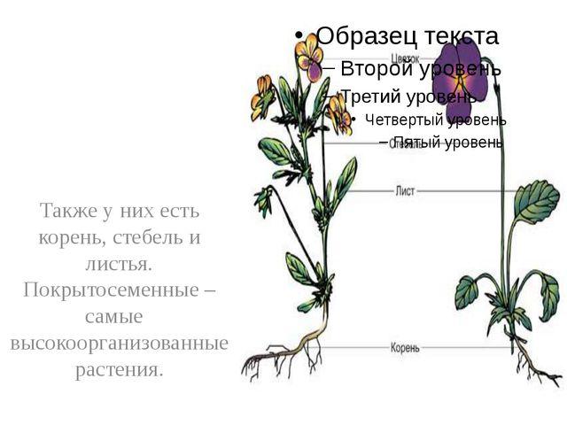 Также у них есть корень, стебель и листья. Покрытосеменные – самые высокоорг...