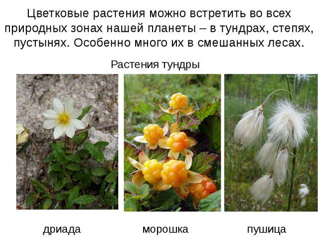 Цветковые растения можно встретить во всех природных зонах нашей планеты – в...