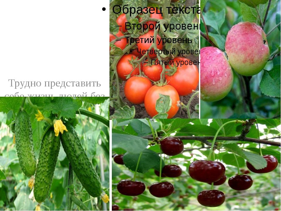 Трудно представить себе жизнь людей без овощных и плодово-ягодных культур –...