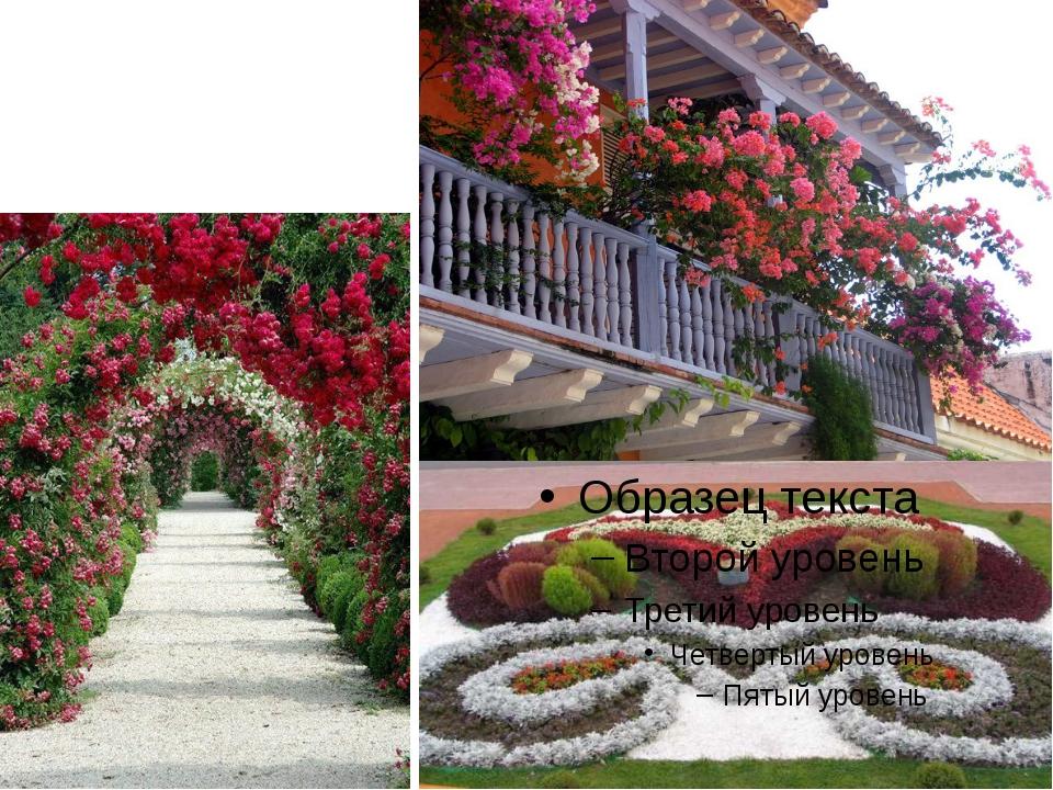 Немаловажна роль растений, которыми человек украшает дома, сады, парки.