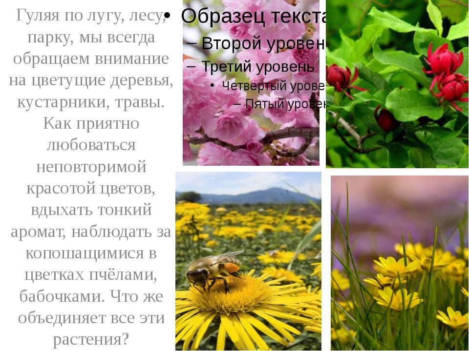 Гуляя по лугу, лесу, парку, мы всегда обращаем внимание на цветущие деревья,...