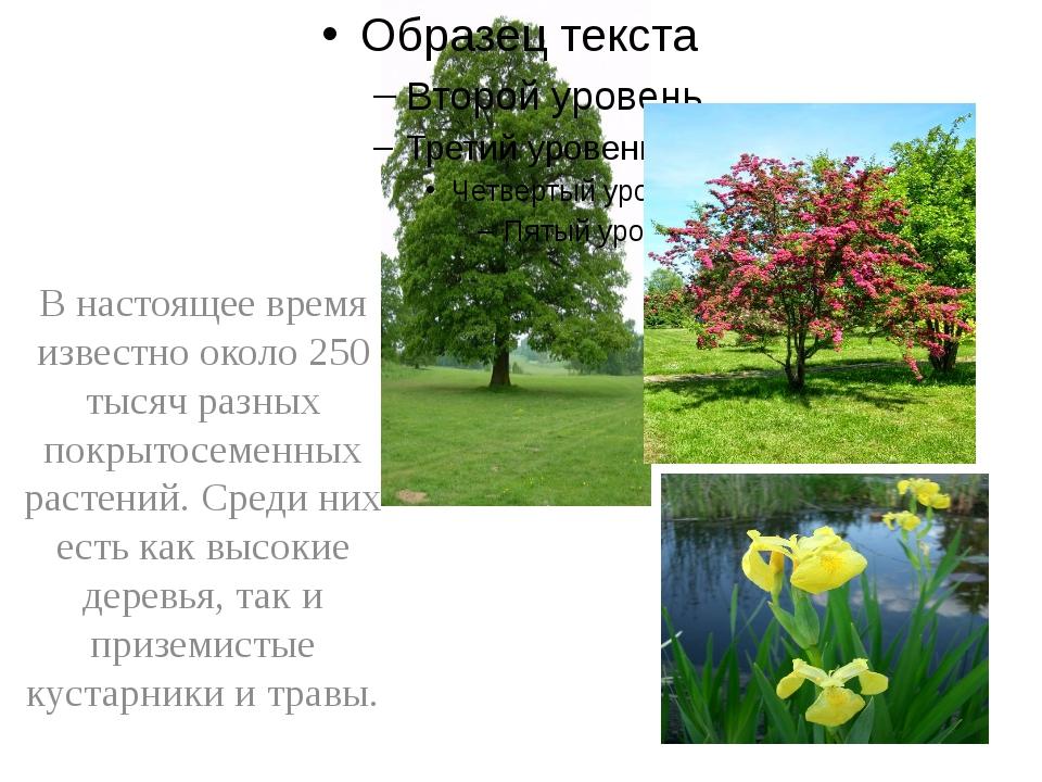В настоящее время известно около 250 тысяч разных покрытосеменных растений....