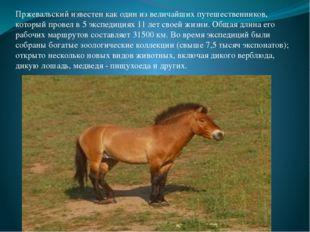 Пржевальский известен как один из величайших путешественников, который провел