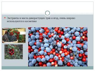 Экстракты и масла дикорастущих трав и ягод, очень широко используются в косм