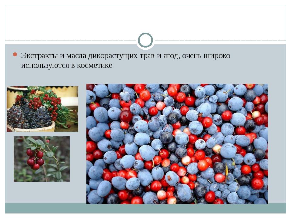 Экстракты и масла дикорастущих трав и ягод, очень широко используются в косм...