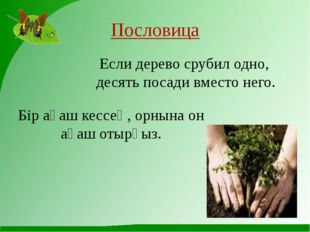 Пословица Если дерево срубил одно, десять посади вместо него. Бір ағаш кессең