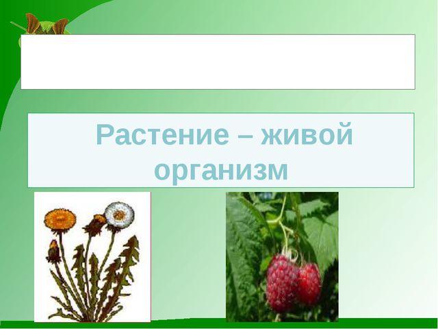 Растение – живой организм