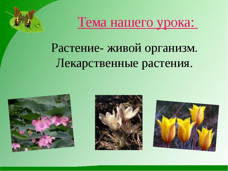 Растение- живой организм. Лекарственные растения. Тема нашего урока: