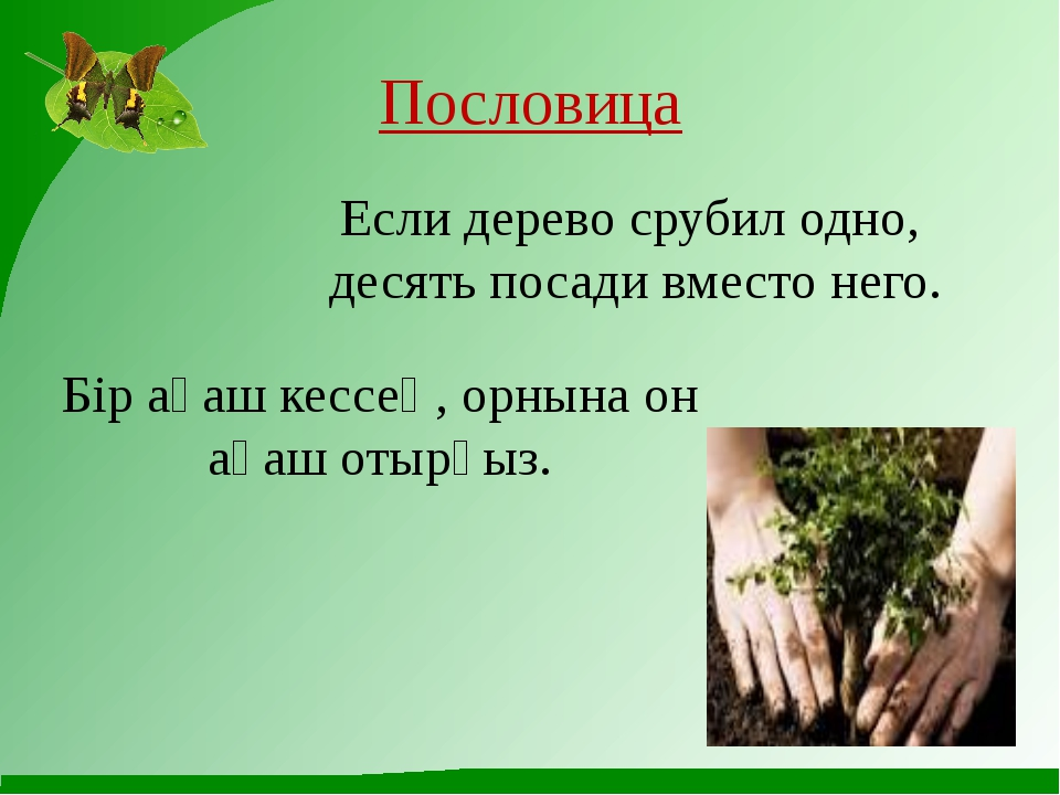 Пословица Если дерево срубил одно, десять посади вместо него. Бір ағаш кессең...