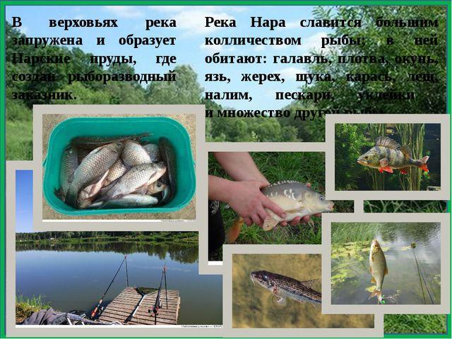В верховьях река запружена и образует Нарские пруды, где создан рыборазводны...