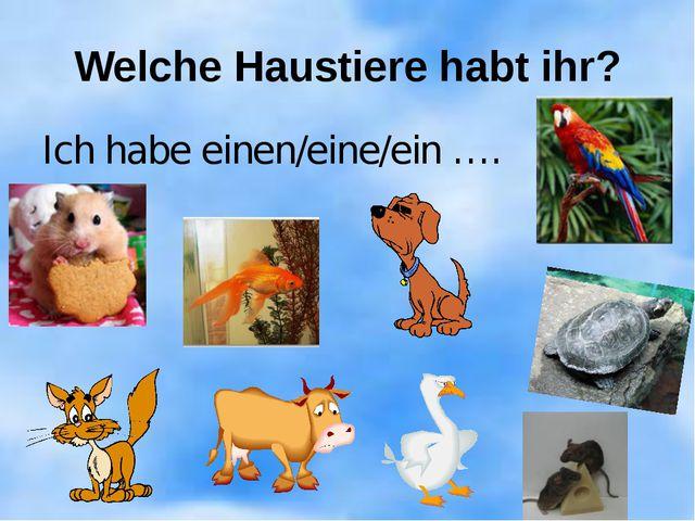 Welche Haustiere habt ihr? Ich habe einen/eine/ein ….