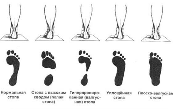 http://www.bestreferat.ru/images/paper/81/98/7239881.jpeg