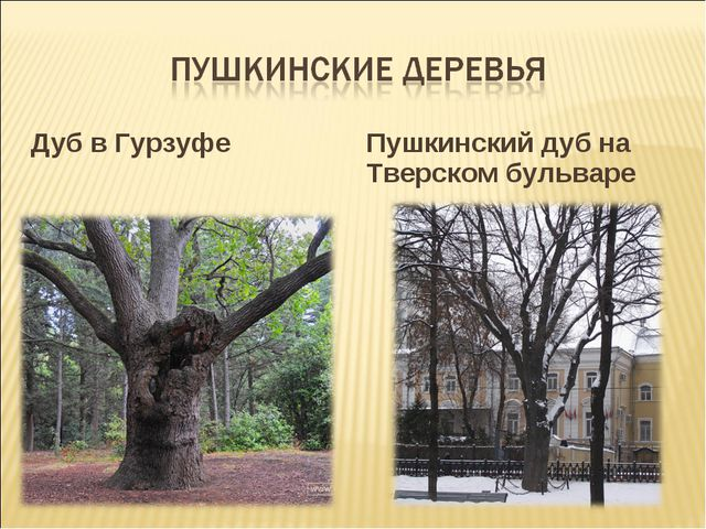 Дуб в Гурзуфе Пушкинский дуб на Тверском бульваре