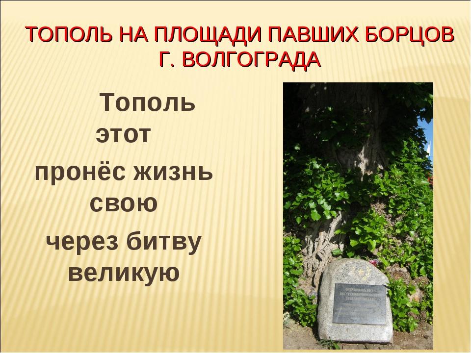 ТОПОЛЬ НА ПЛОЩАДИ ПАВШИХ БОРЦОВ Г. ВОЛГОГРАДА Тополь этот пронёс жизнь свою...